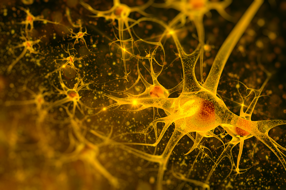 New study Unravels How Motor Neurons Control Muscle Movement