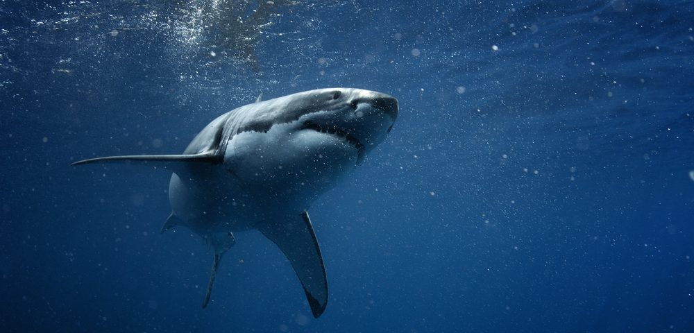 Neurotoxins in Shark Fins, Meat Linked to ALS and Other Neurodegenerative Diseases
