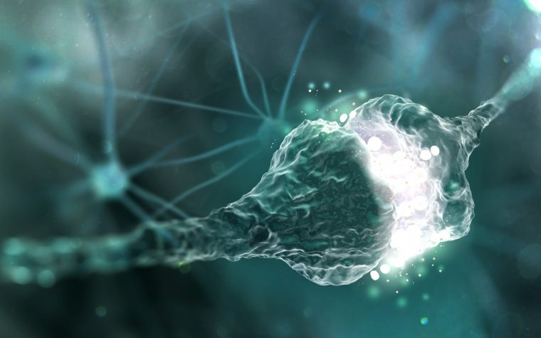 Neuron Death in ALS May Be Triggered by Increased Toxic Excitatory Nerve Signaling