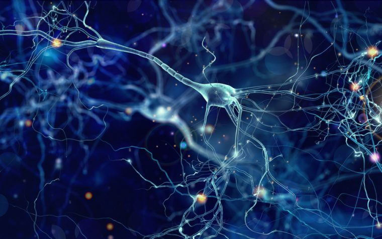 Increasing Dok-7 Protein Levels May Improve ALS Patients' Muscle Function, Study Reports