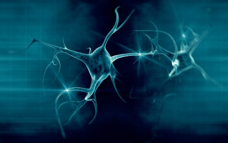 Human Skin Cells Successfully Converted into Motor Neurons